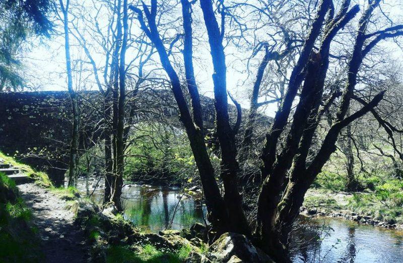 Stream Kielder Water Forest Park